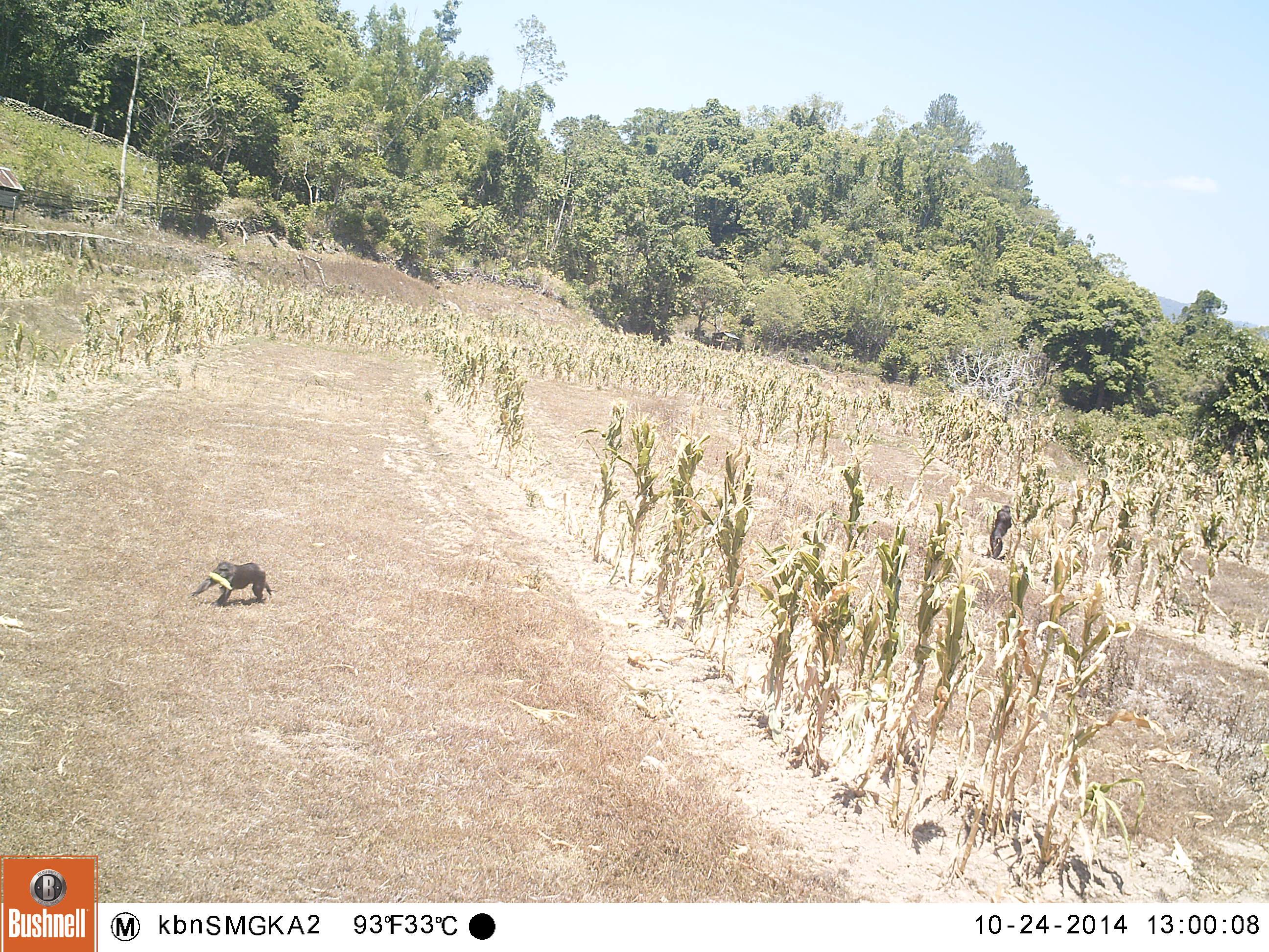 crop feeding